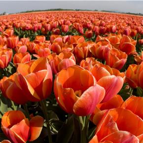 Dagjeinamsterdam | Hou van Holland 3